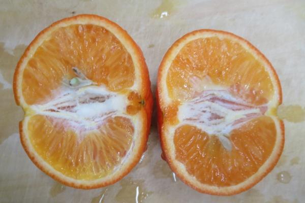 ノバオレンジ断面