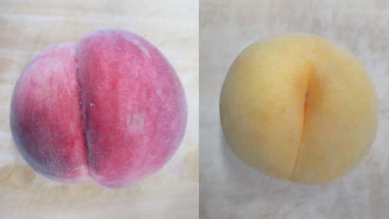 白桃と黄桃
